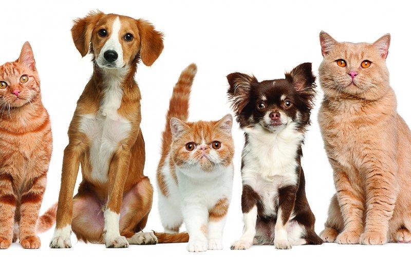 собаки и кошки. картинки